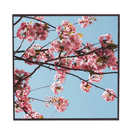 Frühling #fr311