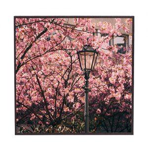 Frühling #fr301