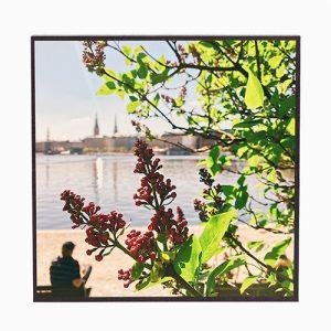 Frühling #fr306
